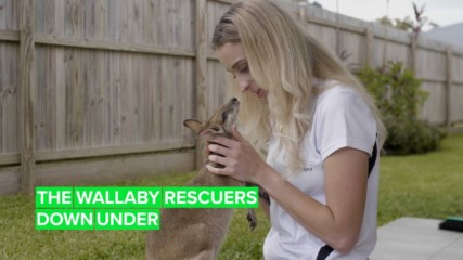 Meet Australia's wallaby guardians