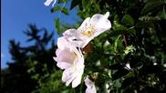 Снимки от Nokia 808 pureview