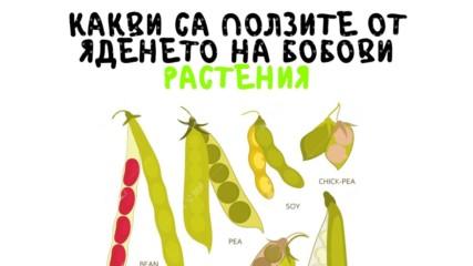 Какви са ползите от яденето на бобови растения