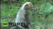 Малки гепардчета в зоологическата градина в Рощок