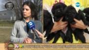 """""""На кафе"""" за обучението на кучетата водачи за незрящи (28.02.2017)"""
