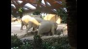 Слонове оказват бърза помощ на падналото си бебе да се изправи на крака!