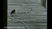 Умната рибарка