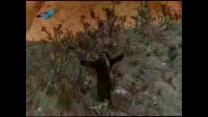 Ахат - Черна Овца - Ahat - Cherna Ovca