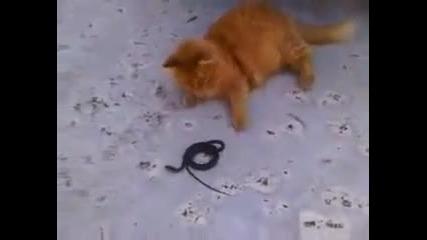 Kitty Kitty vs snake
