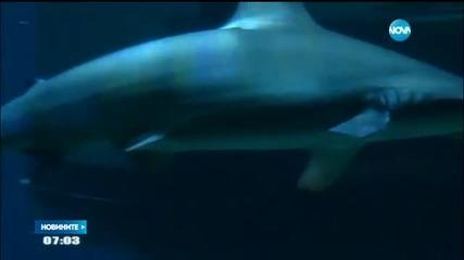 Да спиш сред акули