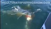 Акула напада риба меч , но победителят е друг !