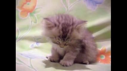 Заспиващ сладур