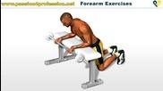 Упражнение за предмишница