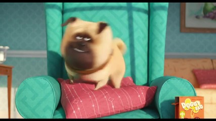 'The Secret Life of Pets' First Trailer