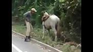 Пиянка и магаре