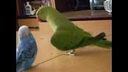 Папагал се прави на маимуна