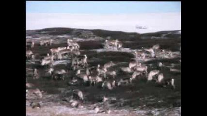 Видео От Хардангервидда 4