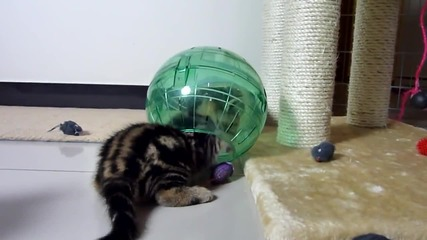 Funny cats. Cutest fluffy Kittens and spacecraft ( Kitten in Hamster Ball )