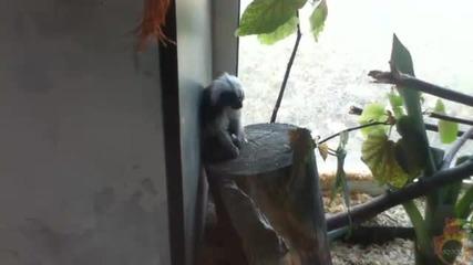 Какво прави тази откачена маймука?!?xd