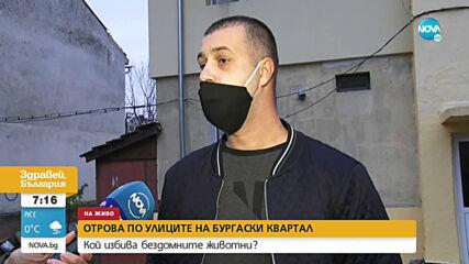 Отрова по улиците на Бургас: Кой избива бездомните животни?