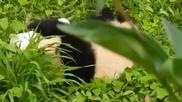 Клипче с Панда