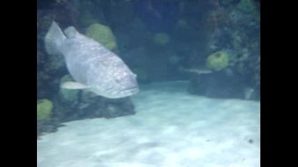 Под водата.