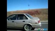 Кон се вози на задната седалка в кола