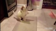 Забавно кученце