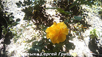 Музыка Сергей Грищук - В Душе Моей Ты Навсегда!