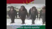 Pkk Halay - Maymun Apo'nun Picleri Halay Cekiyor