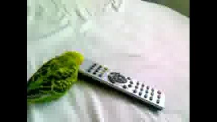 Vulnisto papagal4e