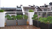 озеленяване тераса фолиране саксии с балконски цветя
