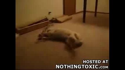 Какво ли е сънувало това куче? (смях)