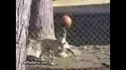 Куче Жонглира С Топка
