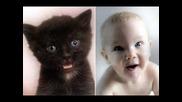 Сладки Прилики Между Котенца И Бебета