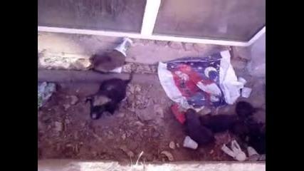 Безобразието на хората - животните около нас!