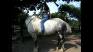 Голям Кон - Big Horse - Percheron