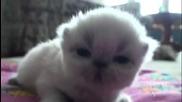 Малко сладко коте бебенце