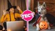 ТЕСТ: Познаваш ли историята на Хелоуин?
