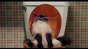 Как котките ходят до тоалетна