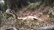 Giant Anaconda attacks