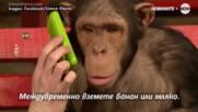 Какво се случва, когато шимпанзе срещне магьосник?