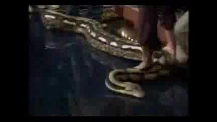 2 Огромни Змии В Тв Шоу!
