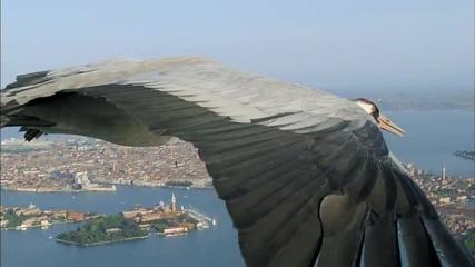 Жерави Летят Над Венеция - Удивителна Гледка!