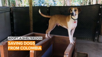 Adopt a shelter dog: The dogs that need a home in Colombia