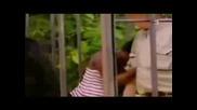 Скрита Камера - Горила И Хора В Една Клетка