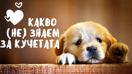 Какво (не) знаем за кучетата