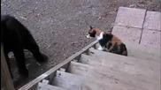Котката показа кой е шефа