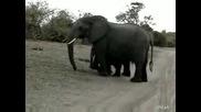 Бебе слонче киха докато го снимат :)