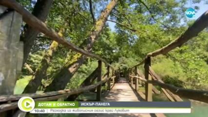ДОТАМ И ОБРАТНО: Разходка из живописния оазис край Луковит