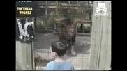 Лъв маркира малко дете по лицето .