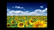 Bassseeker-sunflower