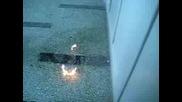 Ogyn V Koridora