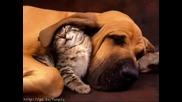 Много Сладки Спящи Котета